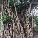 Foto de Saranrom Park