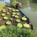 Foto van Hong Kong Wetland Park