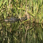 Photo of Everglades Rentals & Eco Adventures