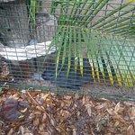 Foto di Peace River Wildlife Center