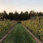Photo of Chianti Wine Tour