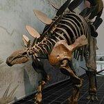 Foto di Senckenberg Natural History Museum (Naturmuseum Senckenberg)