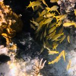 Foto di Reef Oasis Dive Club