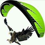 Golden Eagle Paragliding Club Bir Billing