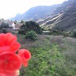 Foto de El Albaricoque Fataga