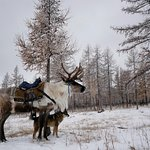 Foto di Mongolia Expeditions