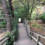 Photo of Filbert Steps