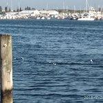 Fremantle Fishing Boat Harbour의 사진
