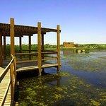 ภาพถ่ายของ Azraq Wetland Reserve