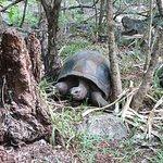 Photo de Ile aux Aigrettes Nature Reserve