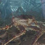 Bilde fra Fisketorget