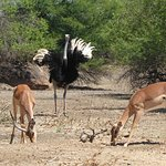 Gaborone Game Reserve Foto