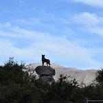 Photo of Mackenzie Sheep Dog Statue