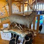 Photo of Notsuke Penninsula Nature Center