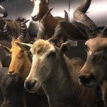 Foto de Beaty Biodiversity Museum