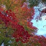 鶴山公園 (津山城)の写真