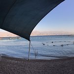 תמונה של ריף הדולפינים אילת
