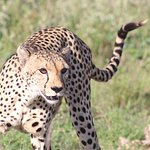 Photo of Aqua Paradise Safaris Day Tours