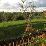 Landscape - RIMBA Jimbaran BALI by AYANA Photo