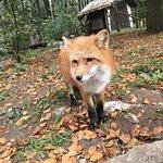 Photo de Wildpark Poing