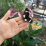 Фотография Dubai Butterfly Garden