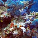 Foto KoroSun Dive