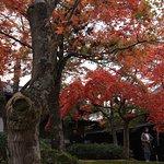 Foto de Hakone Museum of Art