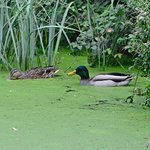 Foto de Rye Meads Nature Reserve