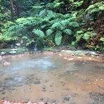 Foto de Caldeira Velha Environmental Interpretation Centre