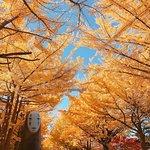 北海道大学札幌キャンパスの写真