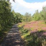 Borkums Naturschutzgebiet Greune Stee ภาพถ่าย