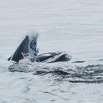 African Shark Eco-Charters Foto