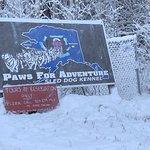 Paws for Adventure의 사진