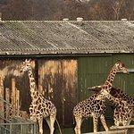 ภาพถ่ายของ West Midland Safari Park