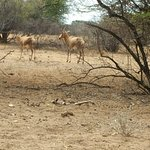 Foto Harnas Wildlife Foundation