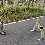 ภาพถ่ายของ Mudumalai National Park