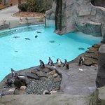 Фотография Krakow Zoo (Ogrod Zoologiczny)