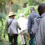 Walk to the Gorillas of Uganda with Enchanted Uganda Safaris .Fort portal Uganda