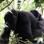 Uganda prime tourist attraction with Enchanted Uganda Safaris ltd