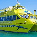 Red Sea Dolphin - Catamaran