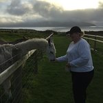 Cardigan Island Coastal Farm Park Photo