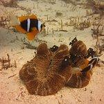 Фотография Buccaneer Diving