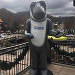 Foto de Ripley's Aquarium Feeding Frenzy Restaurant
