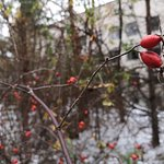 Photo of SoloEast Travel Chernobyl Day Trip