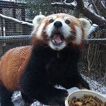 Billede af Miller Park Zoo
