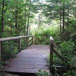 Alert Bay Ecological Park, Alert Bay, British Columbia Photo