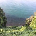Batumi Botanical Gardens-bild