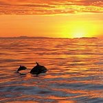 Sunset Tours Available.  East Meets West Excursions with Captain Nick. View Whales and Dolphin in their migration path offshore. Daily Trips. Specializing in Small Boat Size with 6 Passengers Maximum. Book Online emwexcursions.com