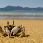 Mission Beach Camping and Caravan Park offers absolute beachfront access with views over to Dunk Island.
