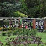 Lady Norwood Rose Garden照片